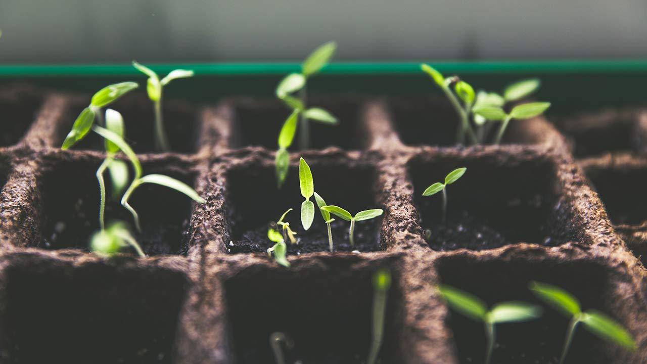 calendrier germination