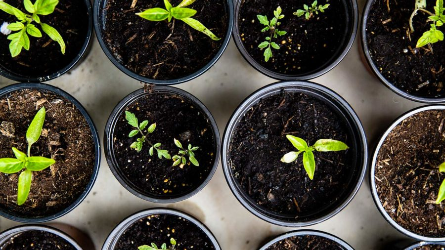 lampe de germination