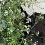 Comment faire un jardin sur le balcon