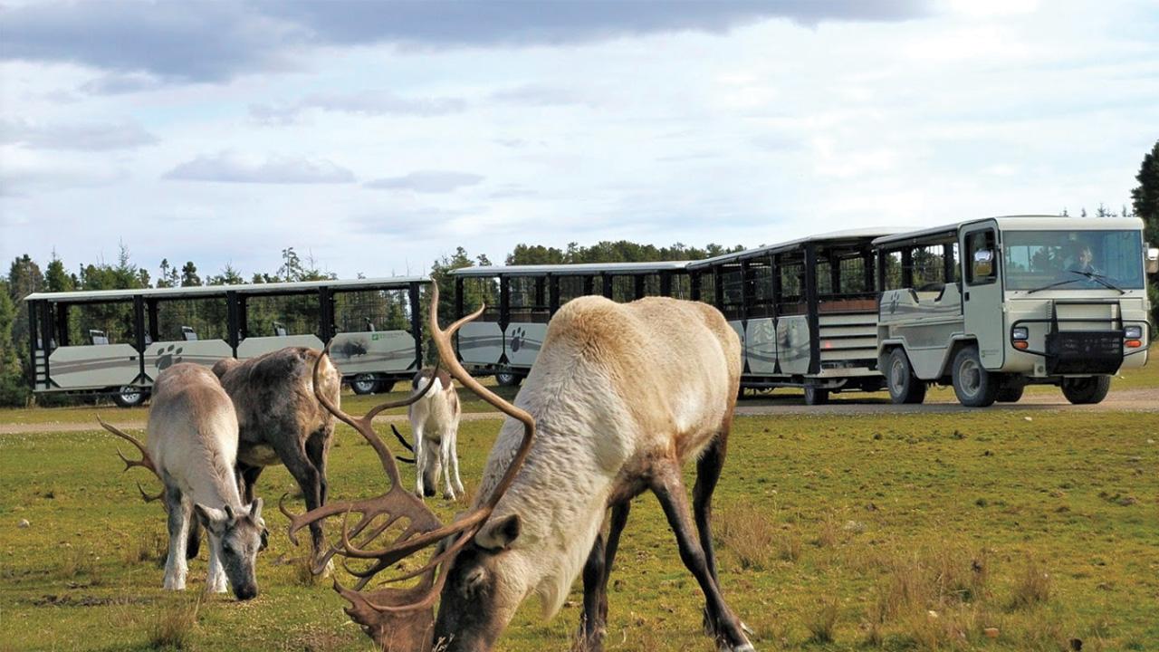 Covid-19 – Les consignes du Zoo de St-Félicien à respecter