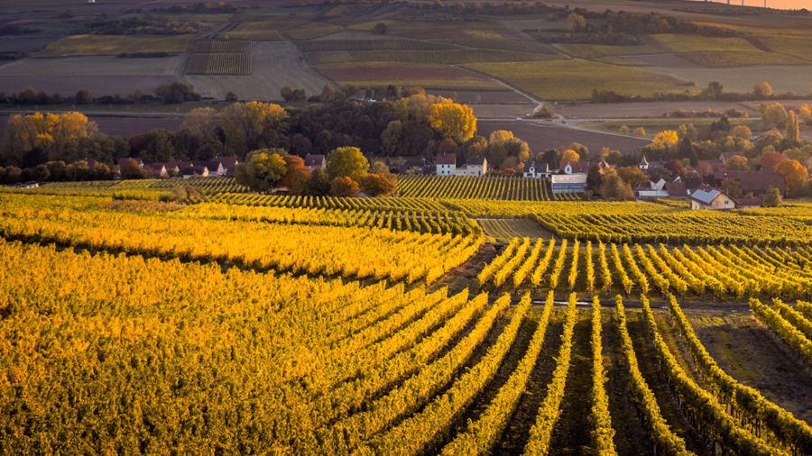 Transformer votre road trip à Charlevoix en visite agricole