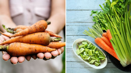 conservation-carrotte-celeri