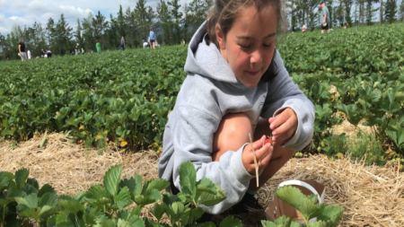 Une activité d'été à faire en famille au Québec