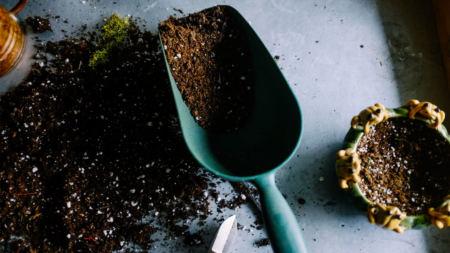 recolte-entreposage-bulbes
